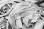 modotti-tina_rose